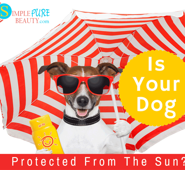 Sunscreen for Dogs: They Need it Too!