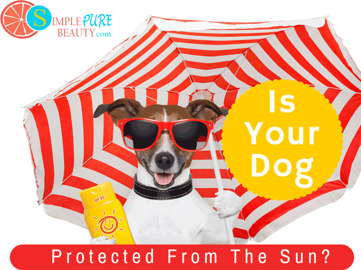 Sunscreen for Dogs: Yep, They Need it Too! | SimplePureBeauty.com