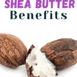 shea nut and shea butter