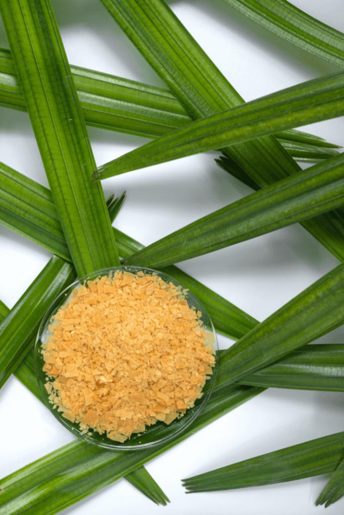 Carnauba Wax Benefits in Skincare