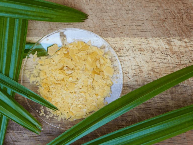 Carnauba Wax: Vegan Beeswax Alternative for Skincare Recipes!